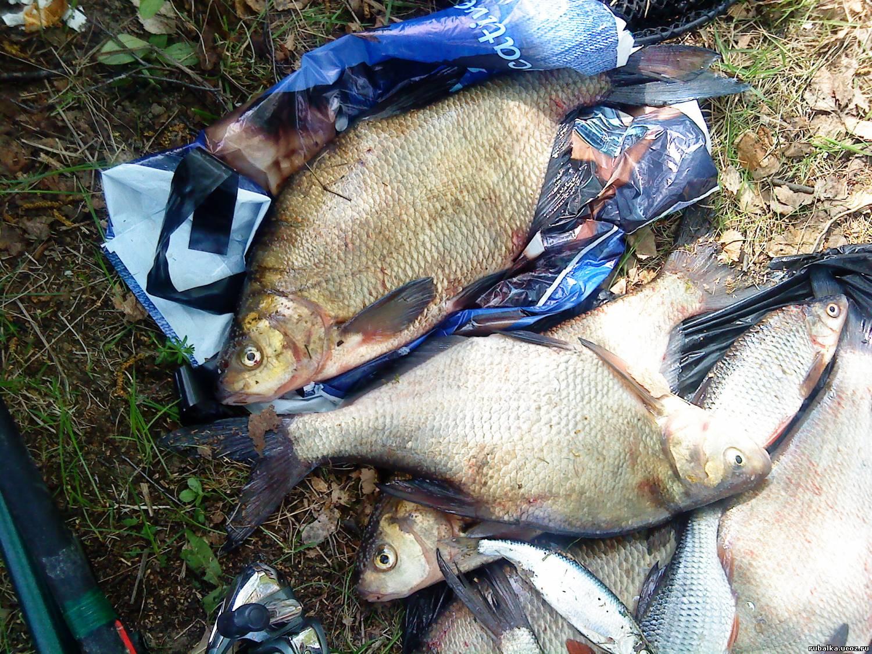 форум о рыбалке на волге. рыбалка в ивановской области